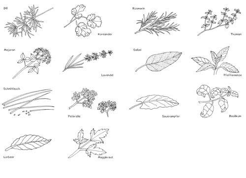 miniwörterbücher  pflanzen pdf  labbé