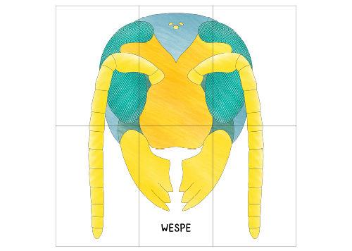 Anleitung - Insekten-Poster