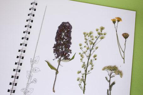 Herbarium mit gesammelten Pflanzen