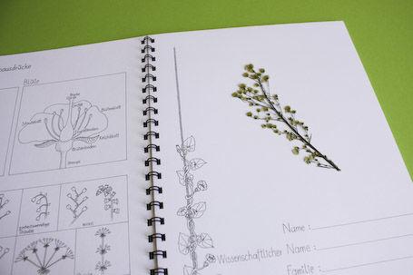 Herbarium zum Einkleben und Bestimmen