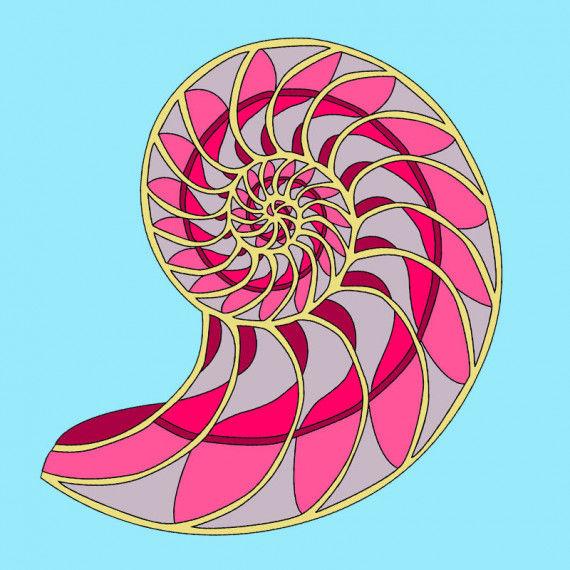 Das wunderschöne Ornament eines Kopffüßlers (Nautilus)