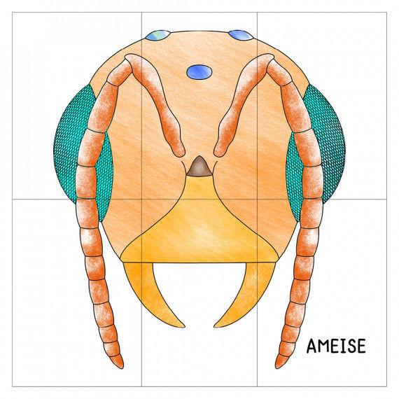 Der Kopf der Ameise als Poster