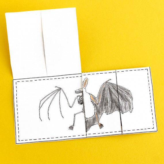 Skelett der Fledermaus zum Aufklappen und Einkleben ins Lapbook