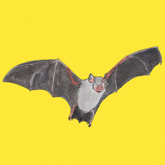 Lapbook - Die Fledermaus