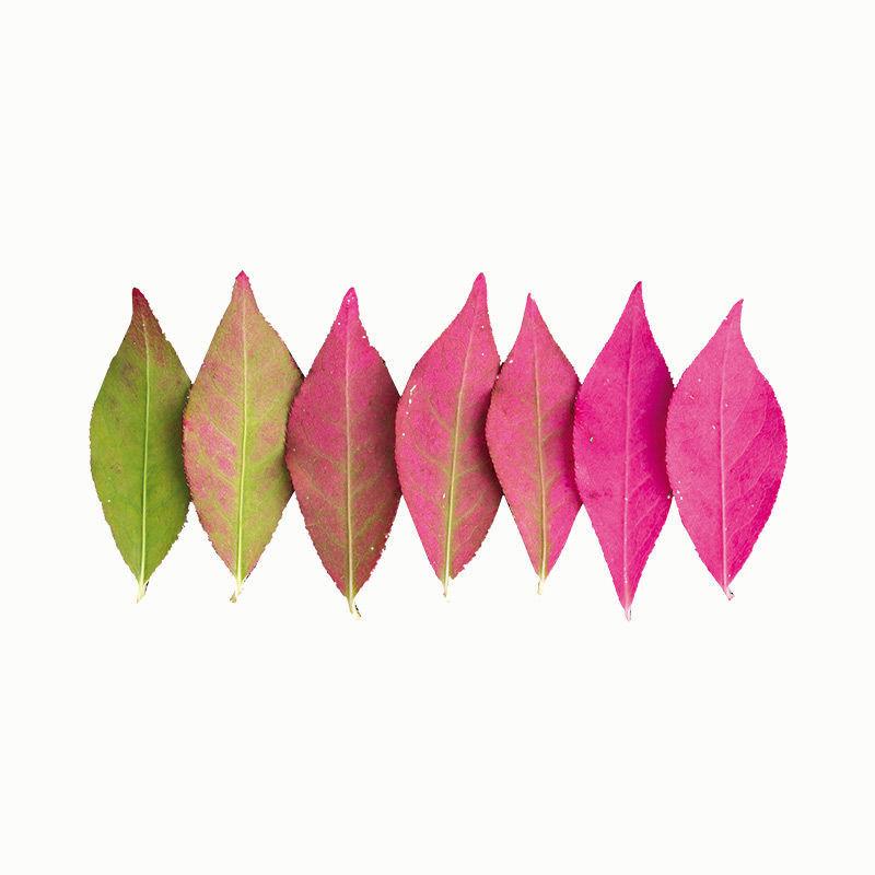 Blätter legen - Herbstblätter nach Farbe sortiert