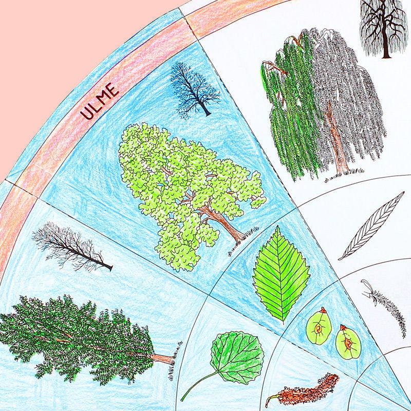 Vorlagen für einen Baumkreis