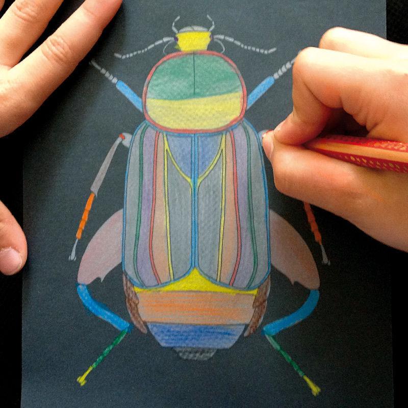 Exotische Käferwelt - Naturornamente