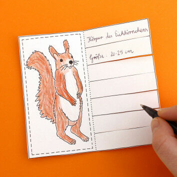 Der Körper des Eichhörnchens - Lapbook-Element zum Klappen