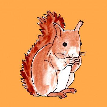Lapbook - Das Eichhörnchen