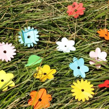 Bunte Schnibbelblümchen wachsen auf der Sommerwiese