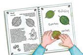Blättersammelbuch