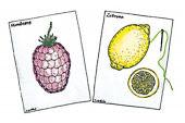 Stickkarten Obst
